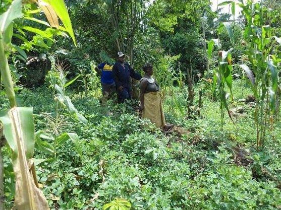 Monitoring Peanut-Corn-Cassava Field