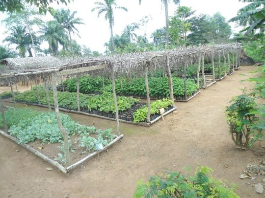 Niania nursery at near capacity