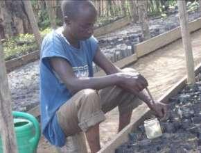 Planting in Agroforestry Garden