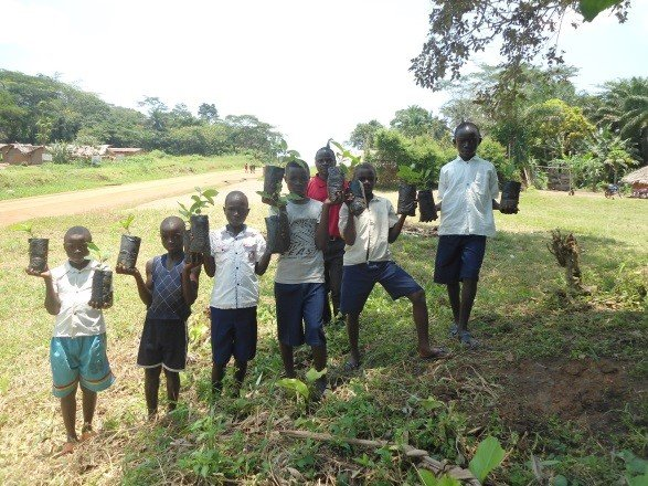 Seedlings for reforestation in school gardens