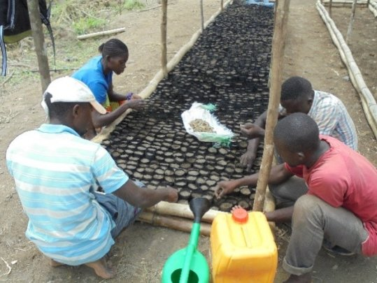 Sowing the first seeds at the Wamba Nursery