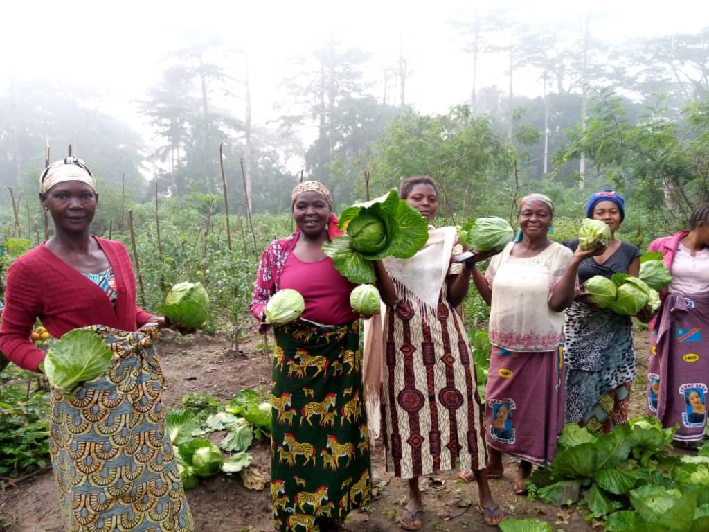 Women with cabbage harvest in Epulu.