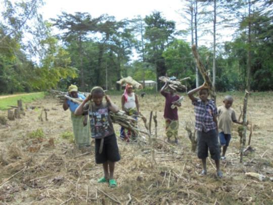 Firewood from experimental field in Epulu