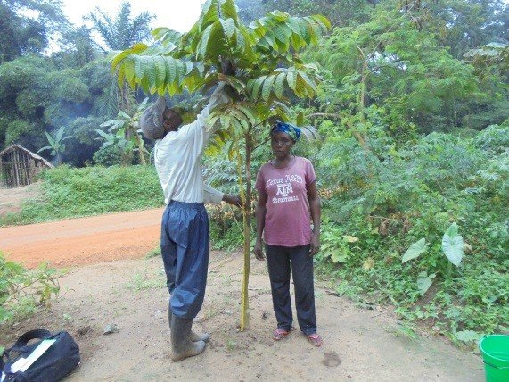 Measuring heights of trees monitors reforestation