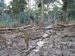 Help Stop Slash and Burn Farming in the Congo