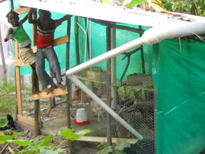 community chicken coup