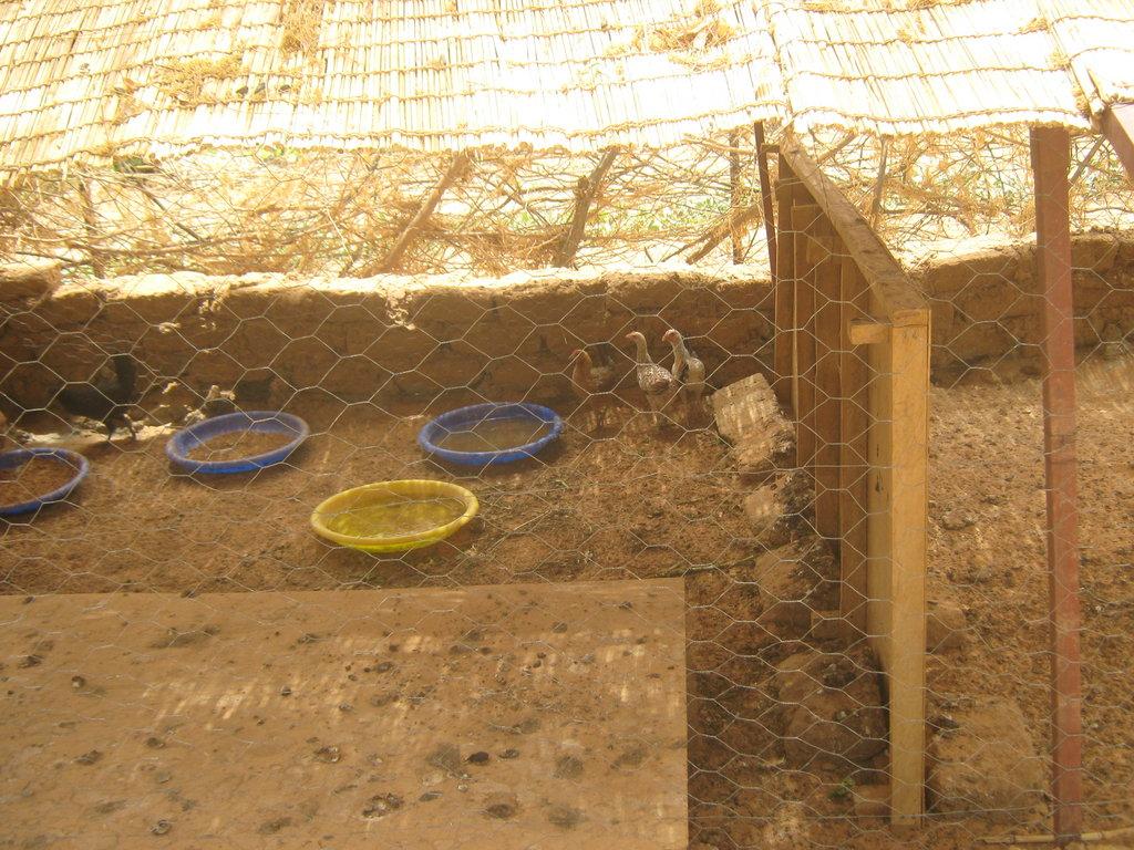Chickens at the Tagantassou garden.