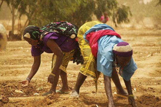 The women of Mari planting their new garden