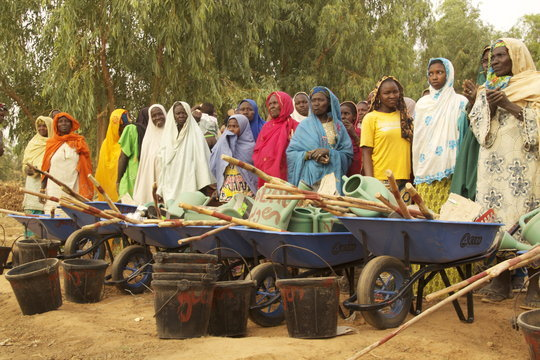Mari women with wheelbarrels at the ready.