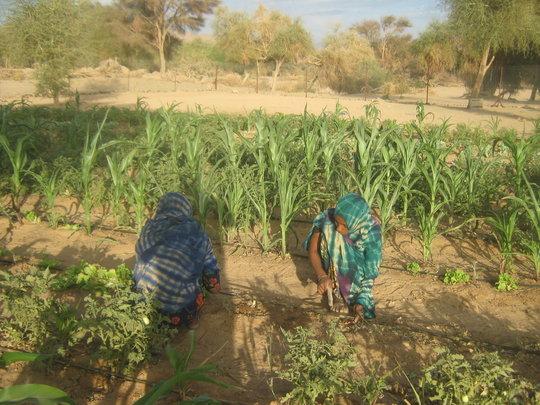 Tadek students in the garden