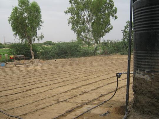 Drip irrigation for the Bonfeba garden.
