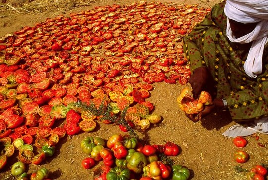 Peppers Drying in the Sun