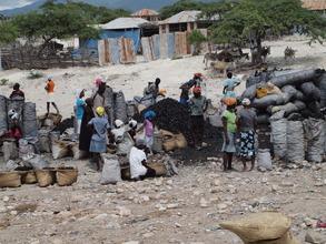 Haitian Charcoal Market