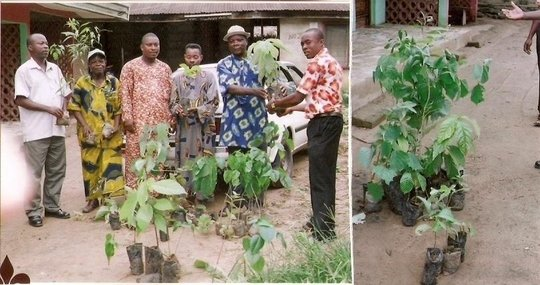 Planting 5,000 trees in 5 villages in Nigeria