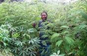 Reforest Habitats for 60 Gorillas in Cameroon