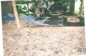 Ensure Livelihood of 100 villagers in India