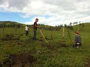 French volunteers planting seedlings.