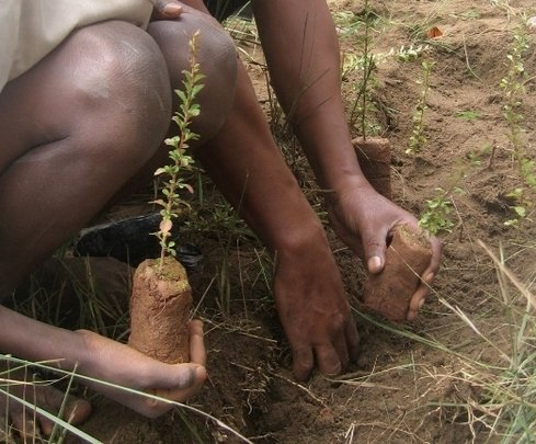 Primary Forest Restoration in Madagascar