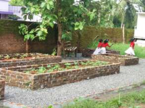 The new vegetable patch
