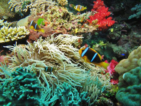Coral Reef, Namena