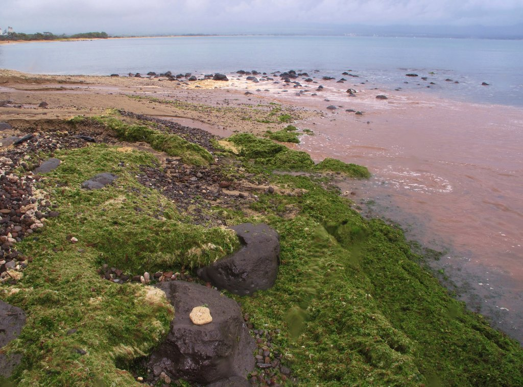 Algae and sediment pollution near reef beach, Maui