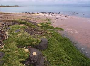 Algae and sediment pollution near reef beach, Maui