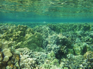 Coral Reefs in Maui
