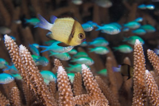 Uniting Communities to Save Coral Reefs