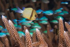 Help Protect Our Planet's Coral Reefs