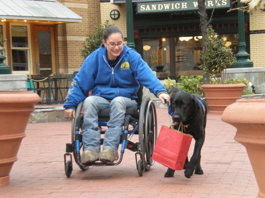 Assistance dog pulling a wheelchair