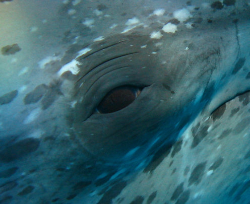 Look into this dolphin