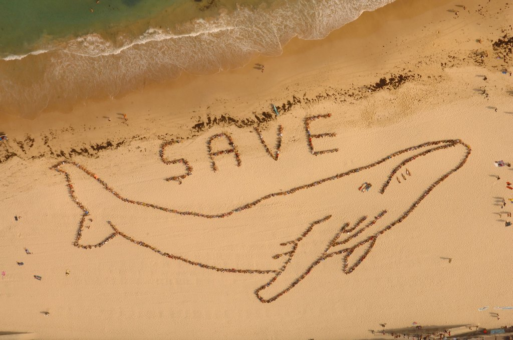 Save the Whales Again!