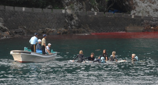 Hayden in Taiji's blood filled waters