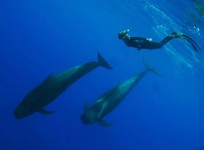Hayden swimming with pilot whales