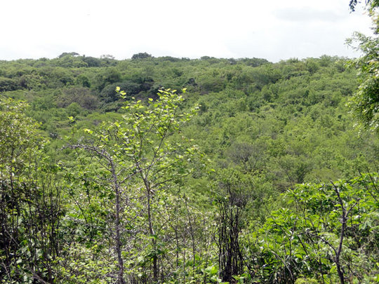 The Lopez's forest to be conserved for you