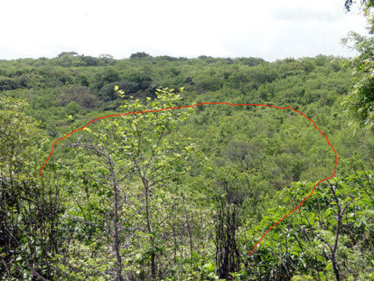 8 hectares of the regenerated forest