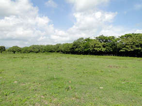 40 hectares plot of tropical forest