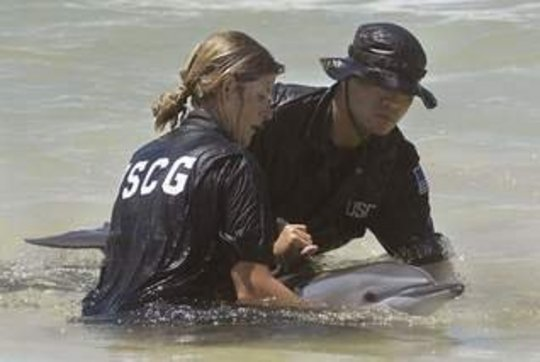 Attempted Dolphin Rescue in Gulf