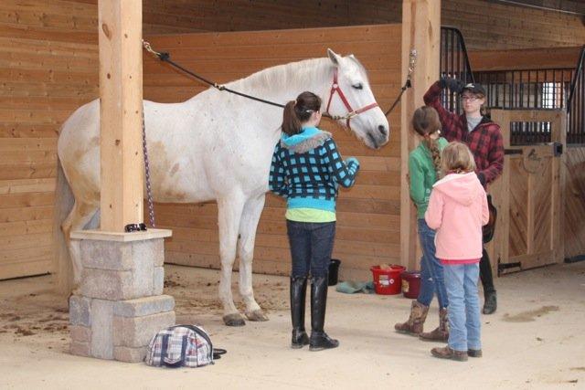 Volunteers Preparing the Horses