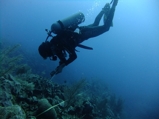 Protect Marine Ecosystems in Mexico