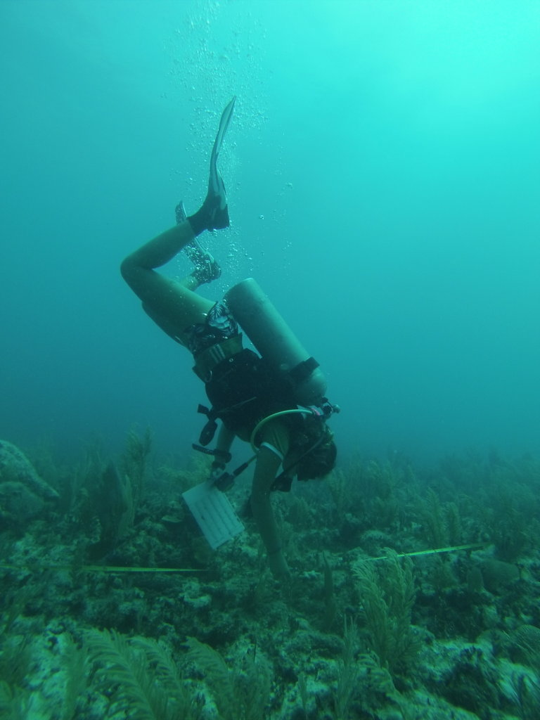 Protecting Marine Ecosystems in Mexico