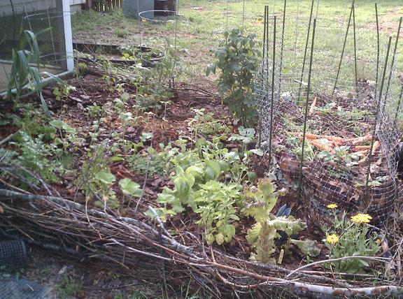 Help 20 million novice gardeners succeed worldwide