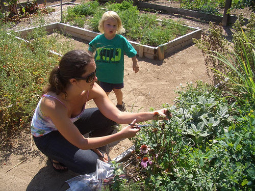 Gratitude Gardens, global, biodiverse home farms