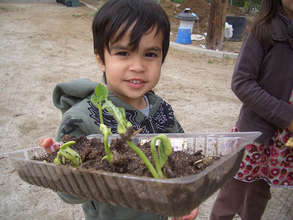 Gratitude Gardens, global, biodiverse home farms