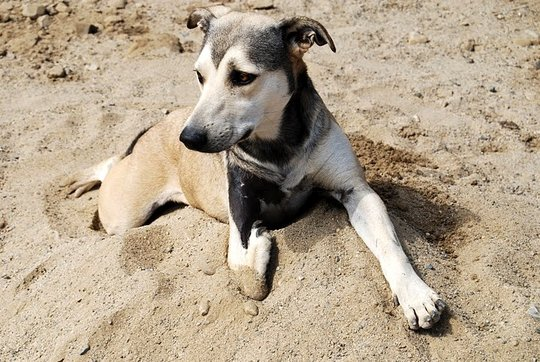 Shelter dog Lupita