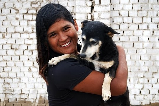 Spay & Neuter street dogs of Huanchaco, Peru - Give Green