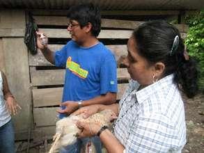 Chicken Vaccination Workshop