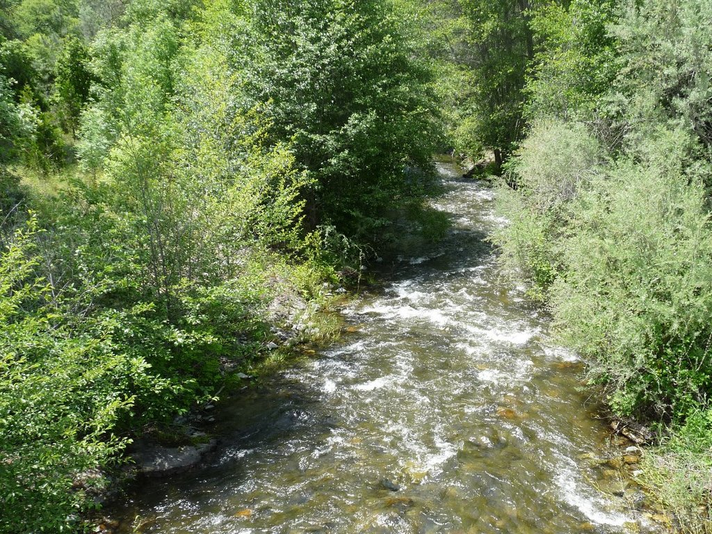 Restoring water in the Little Applegate River