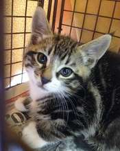 Kittens must be 2 mths &  2 lbs to spay/neuter