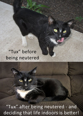 Tux - before and after his visit to FCCO